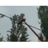 Кронирование деревьев Киев.  Обрезка веток.  Удаление деревьев Киев.