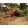 Кронирование деревьев Киев,   спил деревьев,  снос дома Киев.