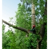 Спил деревьев  Киев.    Удаление пней,    вывоз веток 0675012805