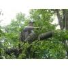 Удаление деревьев Киев.     0675012805  Кронирование,     обрезка деревьев.